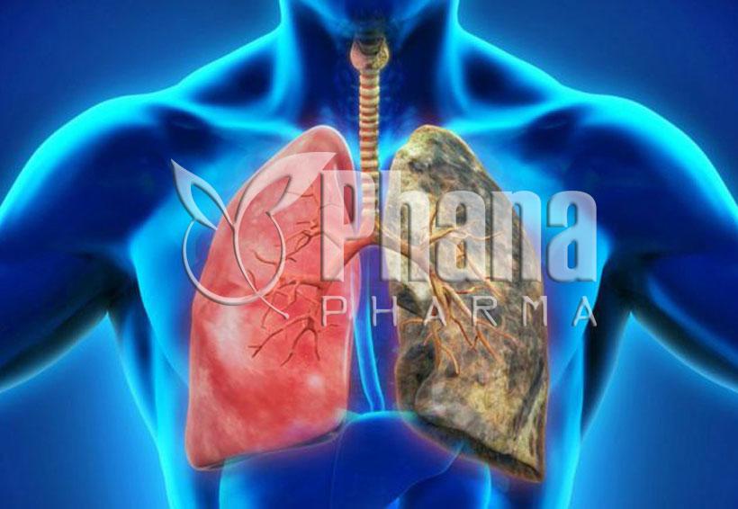 Đông trùng hạ thảo hỗ trợ chức năng phổi