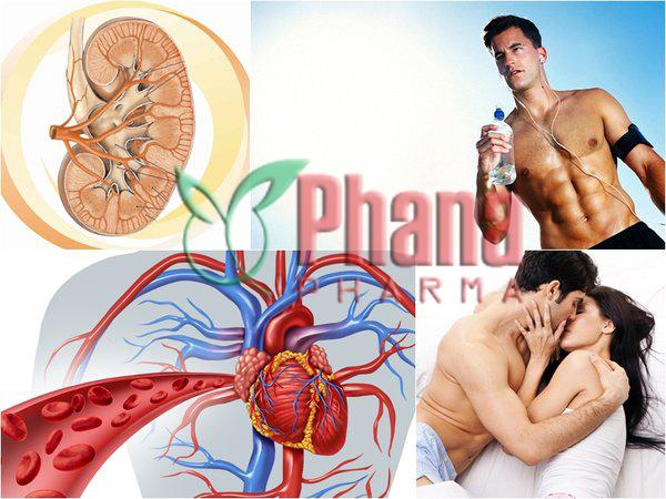 Đông trùng hạ thảo tốt cho cơ quan phục vụ sinh lý